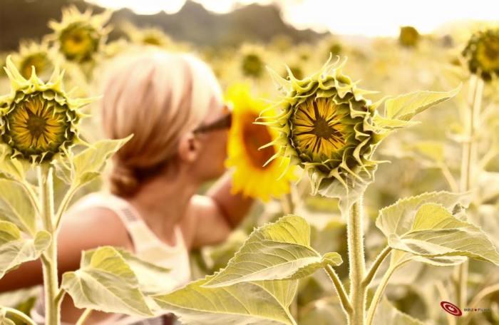 sunflowerskiss silvia tuscany
