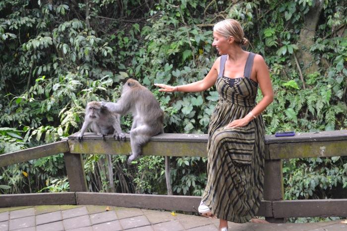 monkey-silvia-touch